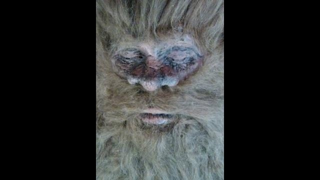 Bigfoot face picture