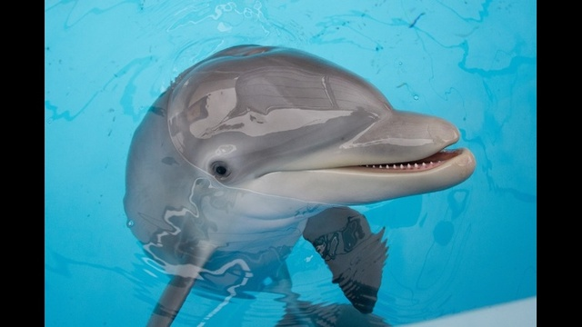 Dolphin close-up