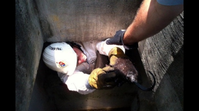 Kitten rescued from storm drain 2