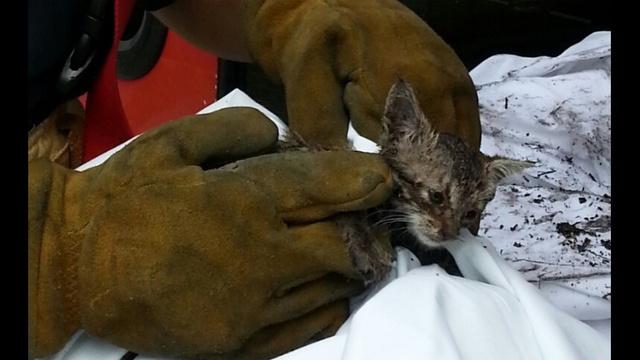 Miami firefighters rescue kitten close_20639636