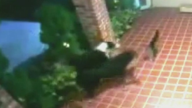 Stray dogs attack cat in Hollywood neighborhood
