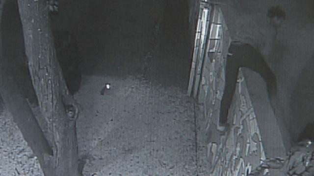 Wynwood Surveillance