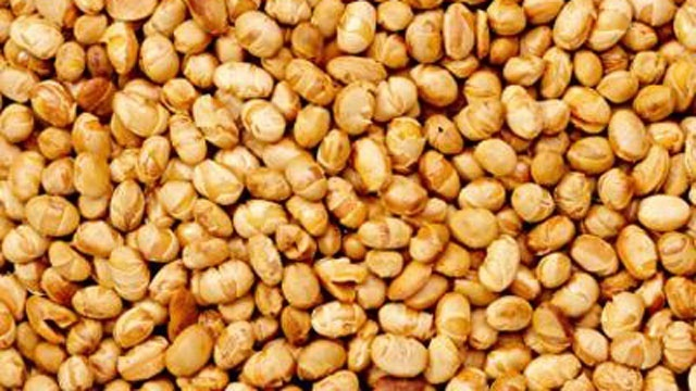 soy nuts closeup