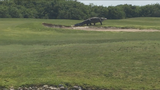 Large gator spotted roaming Florida golf course