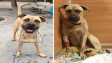 Dog recovering after being shot twice by Miami Gardens police officer