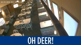 Deer breaks into restaurant, surprises customers