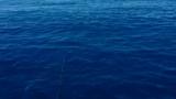 Famous fisherman hauls in kilo of cocaine off Miami coastline