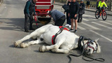 Carriage horse collapses in Central Park, sparking outrage