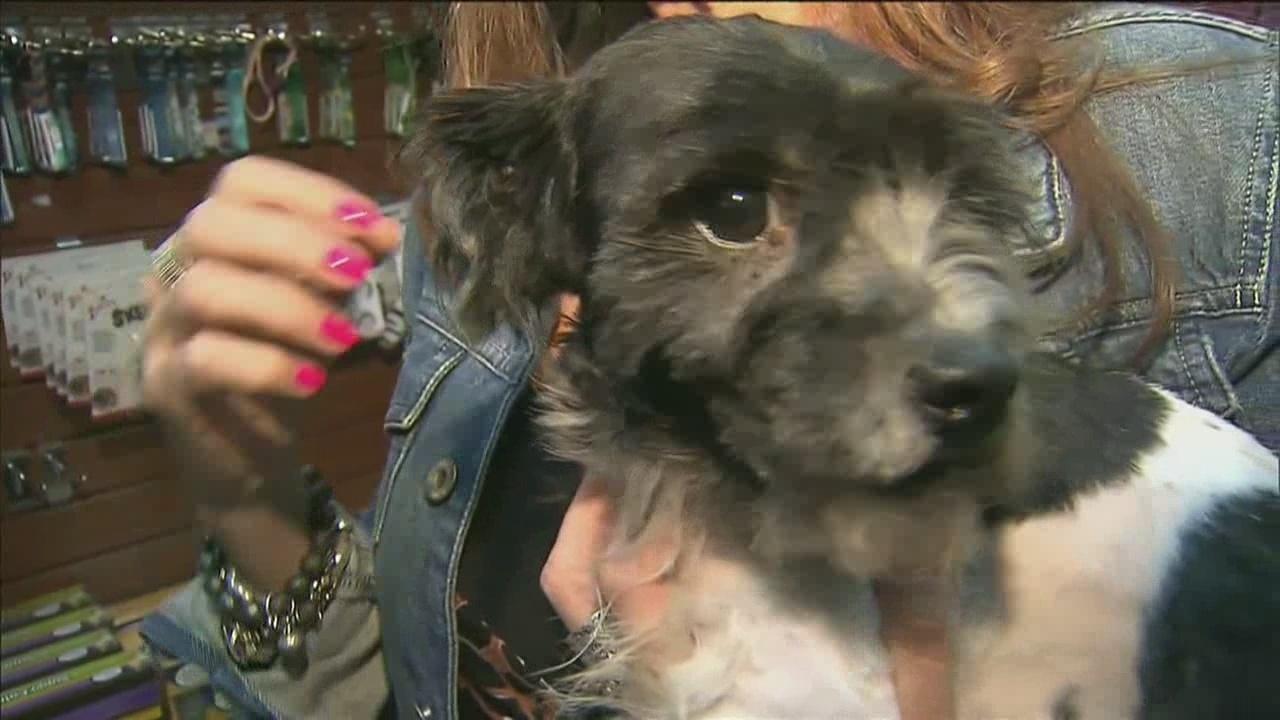 Miami County Dog Adoption