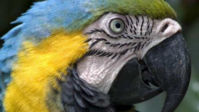 blue macaw parrot_168542