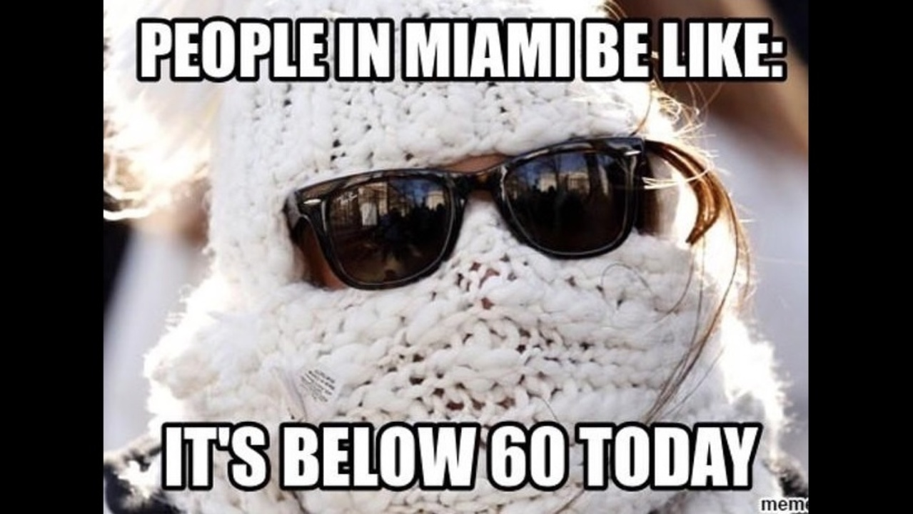 Image result for miami meme
