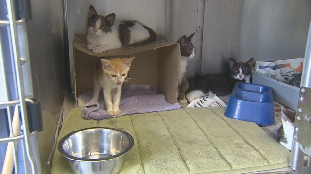 Cats_22976148