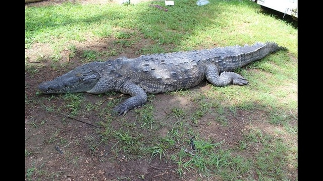 Crocodile-pictures-1.jpg_27797284