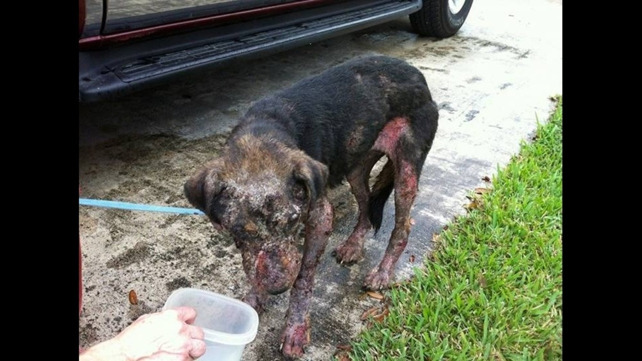 Abandoned Dog Found Rescued In Everglades