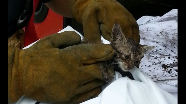 Miami firefighters rescue kitten close_20639636
