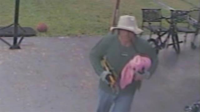 Parrot burglar_21715912