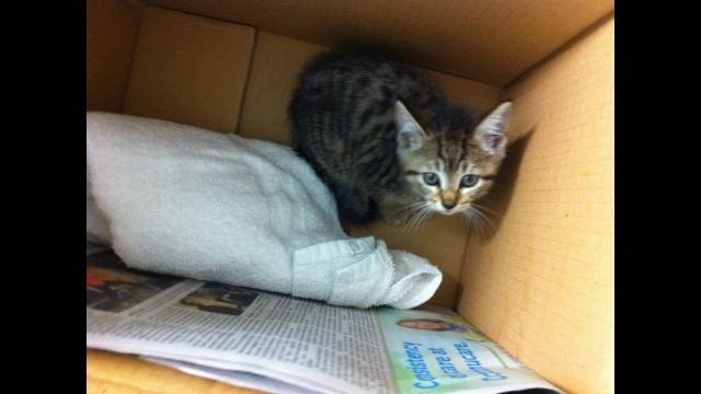 Rescued kitten_25741472