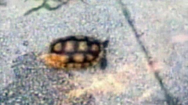 Tortoise-set-on-fire.jpg_27008586