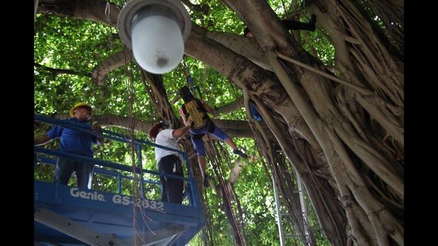 Woman-stuck-in-tree-rescued-7-jpg.jpg_26501928