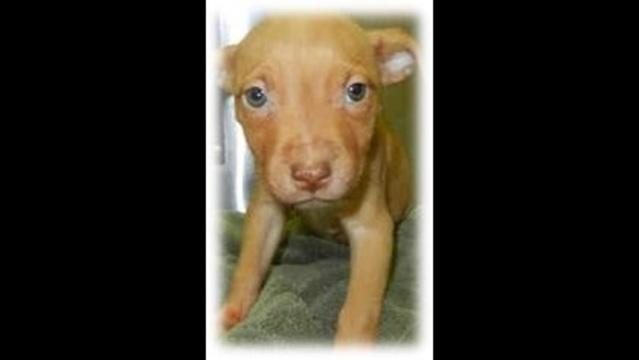 Puppy pic that Kiara saved_23510934