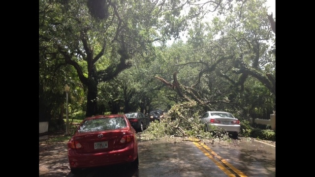 Tree vs car_20259030