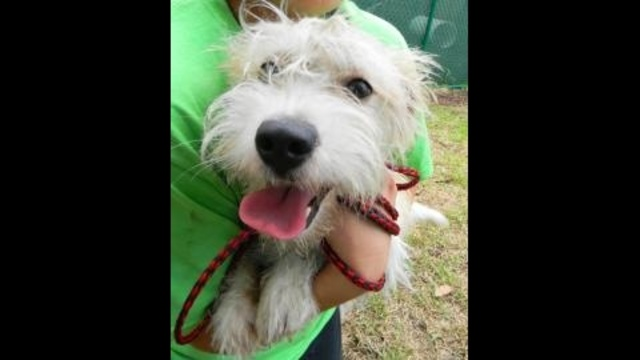 11-month-old Monty is one of hundreds of dogs who need a loving home!_17120356