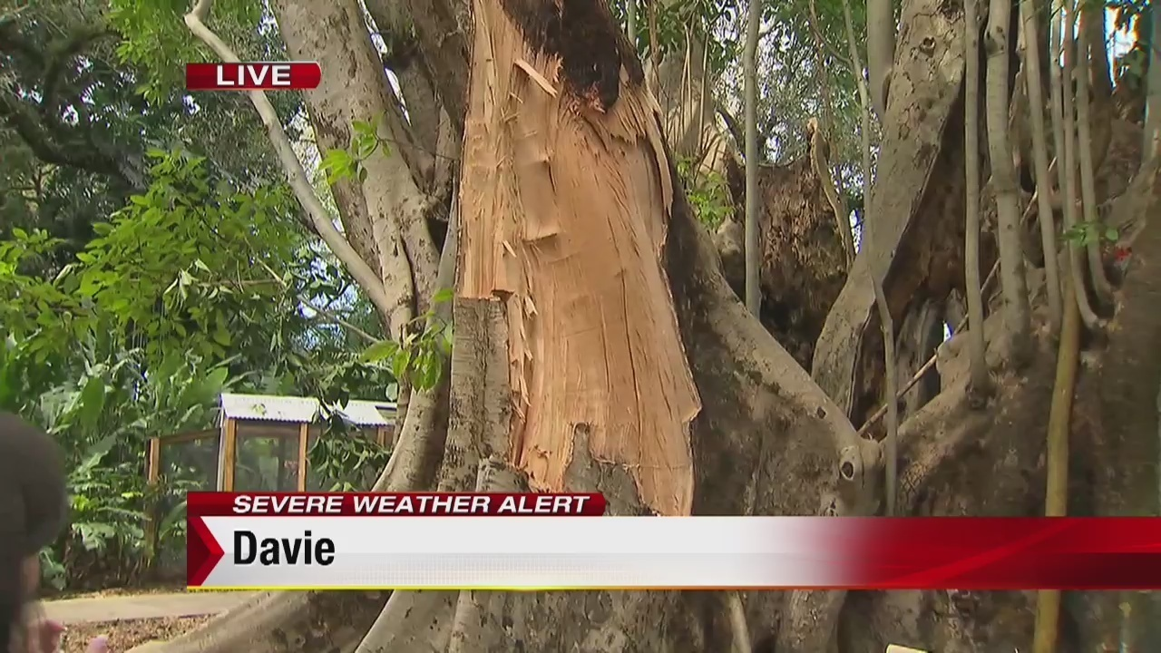 Decades-old trees damaged at Flamingo Gardens