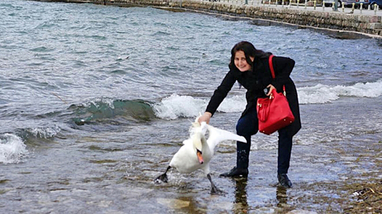 Swan dies after tourist drags it out of water for photo
