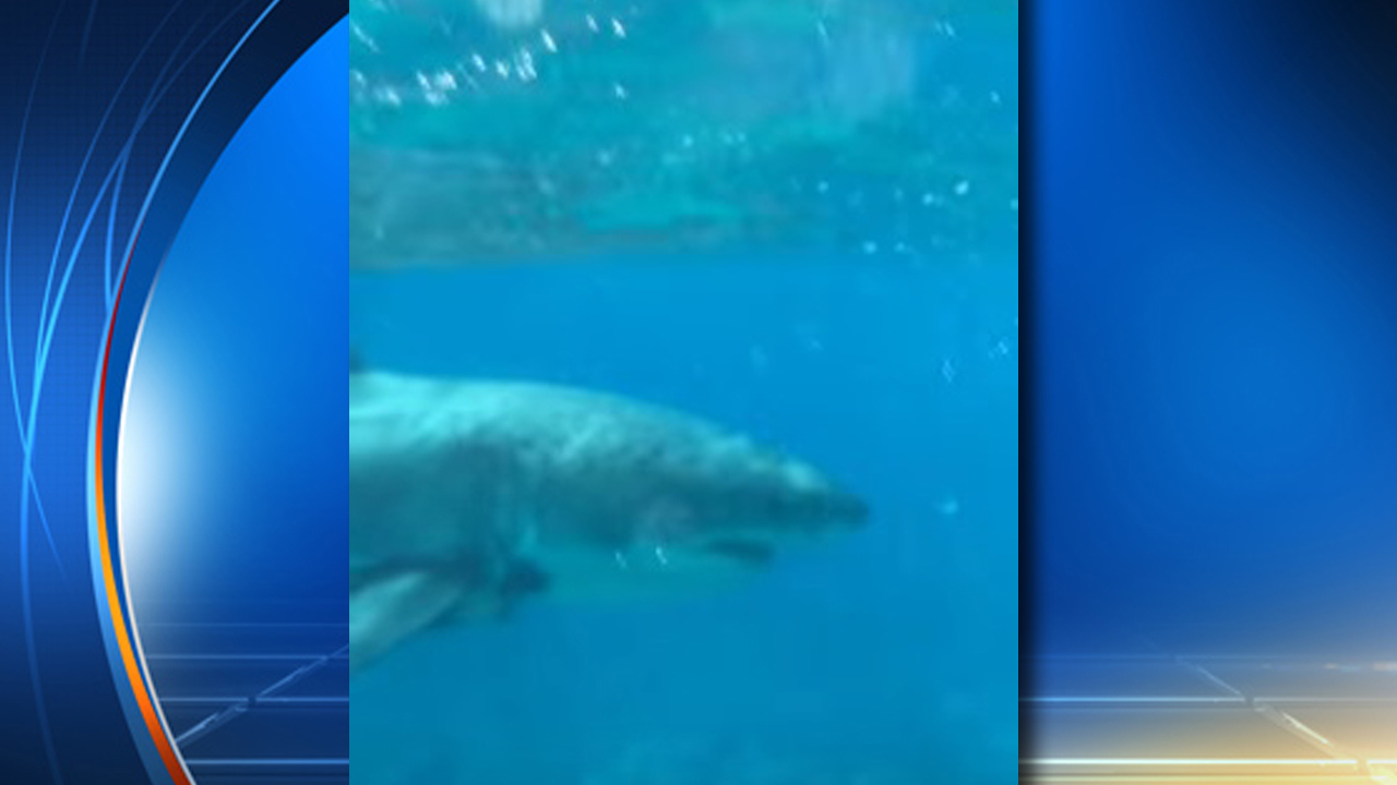 Great White Shark Spotted In Florida Keys