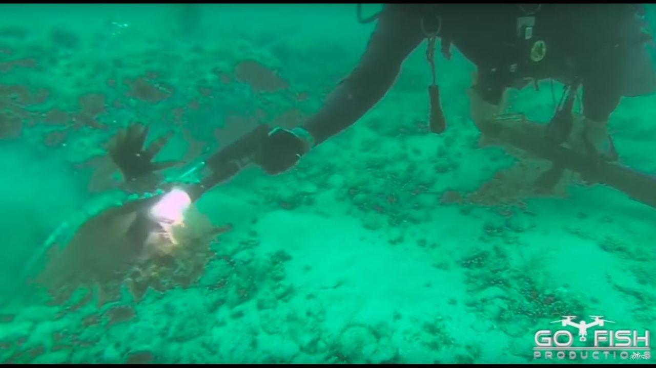 Florida Man Uses Modified Handgun To Kill Lionfish 100 Feet
