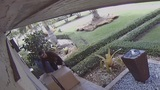 Neighbors scare off man attempting to steal packages outside Kendall home