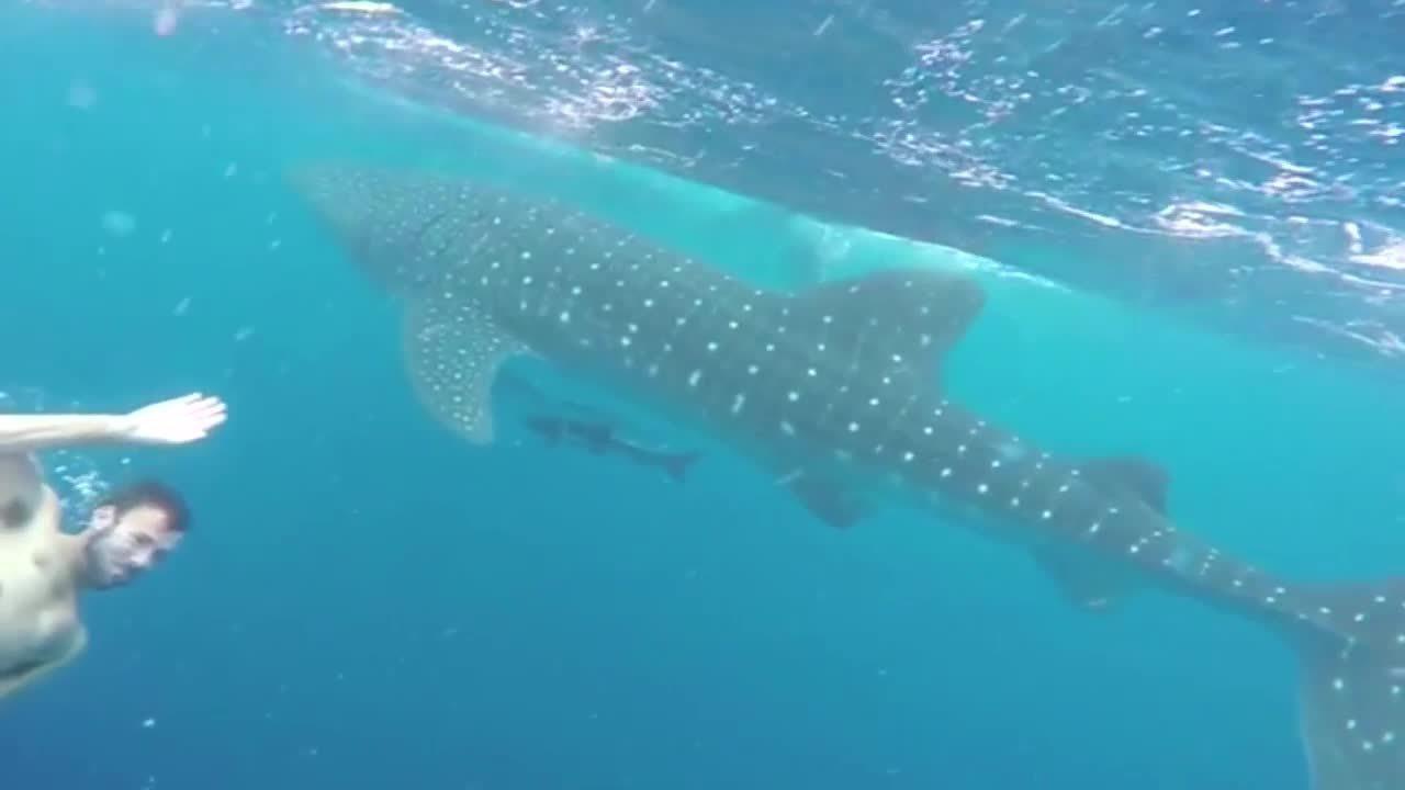 Miami Beach Sharks Today