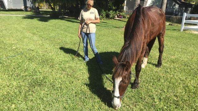 Trigger at Horse Farm