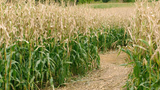 Farm safety reminders and tips during harvest season