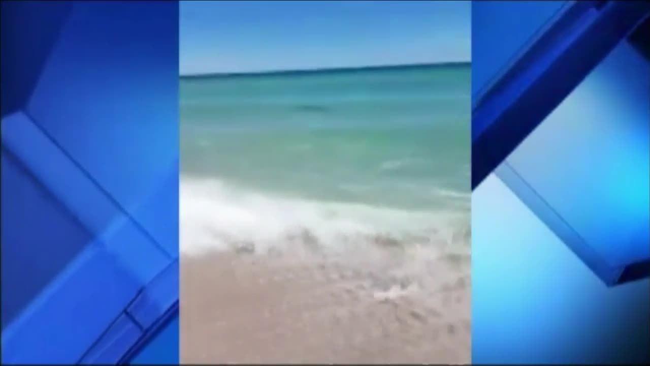 Shark Sightings Miami Beach