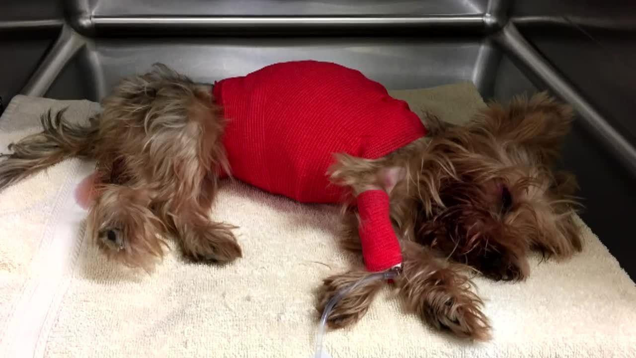 Dog Adoption In Miami Beach
