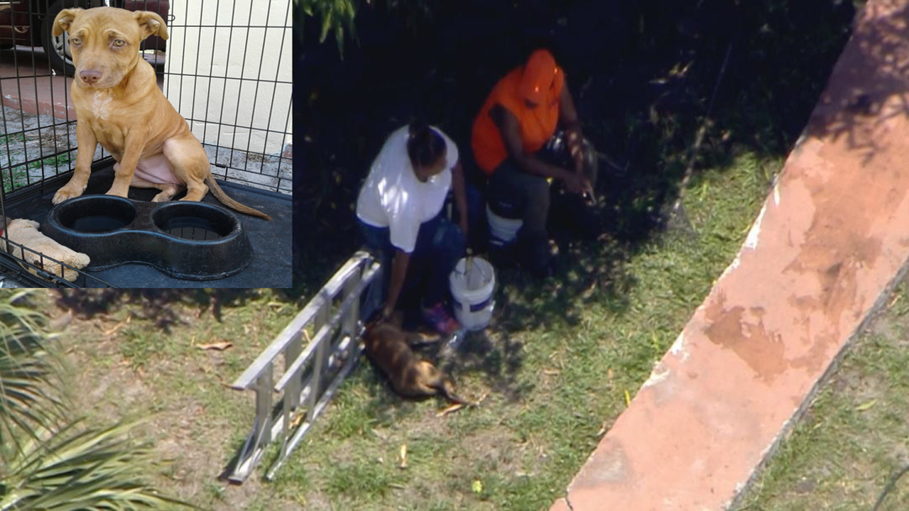 Puppy Rescued From Smoke Filled Home In Fort Lauderdale