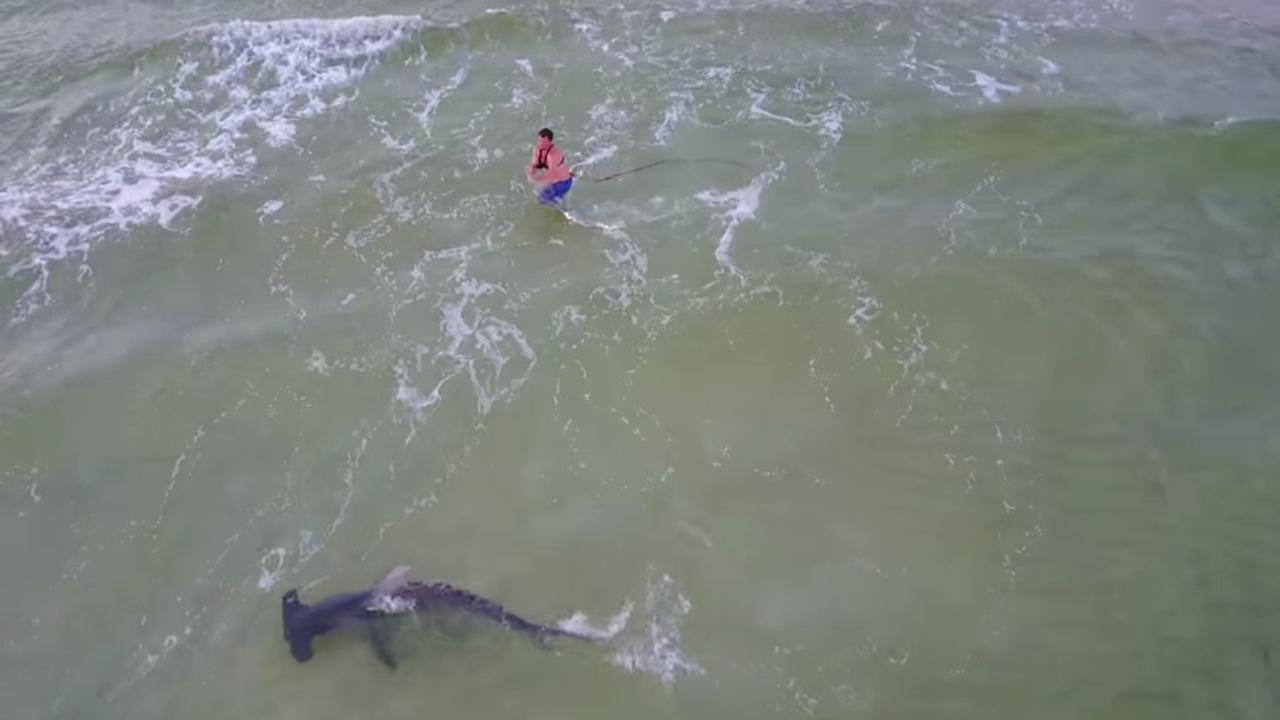 Hammerhead Shark Caught In Panama City Beach