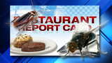 South Florida Red Lobster, Papa John's ordered shut due to roaches