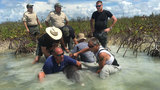 'Dolphin Tale' rescuer helps save porpoise in Florida Keys