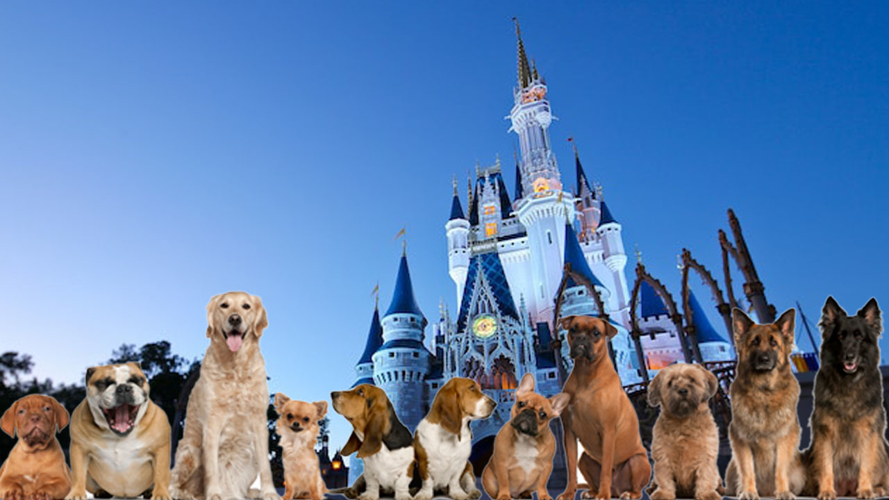 Disney world goes to the dogs pets now welcome at resort for Pet boarding near disney world