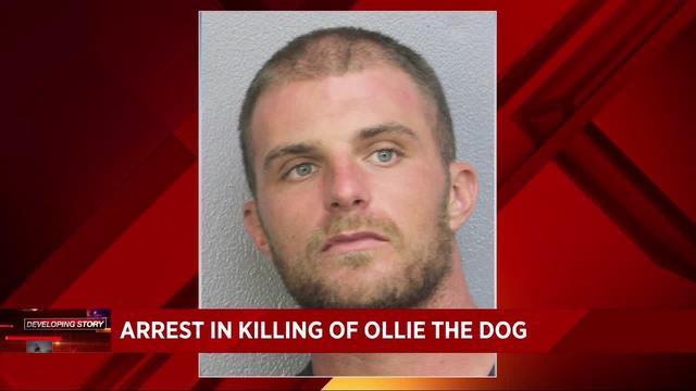 Hollywood Police arrest man in Ollie's vicious killing20171122231216.jpg