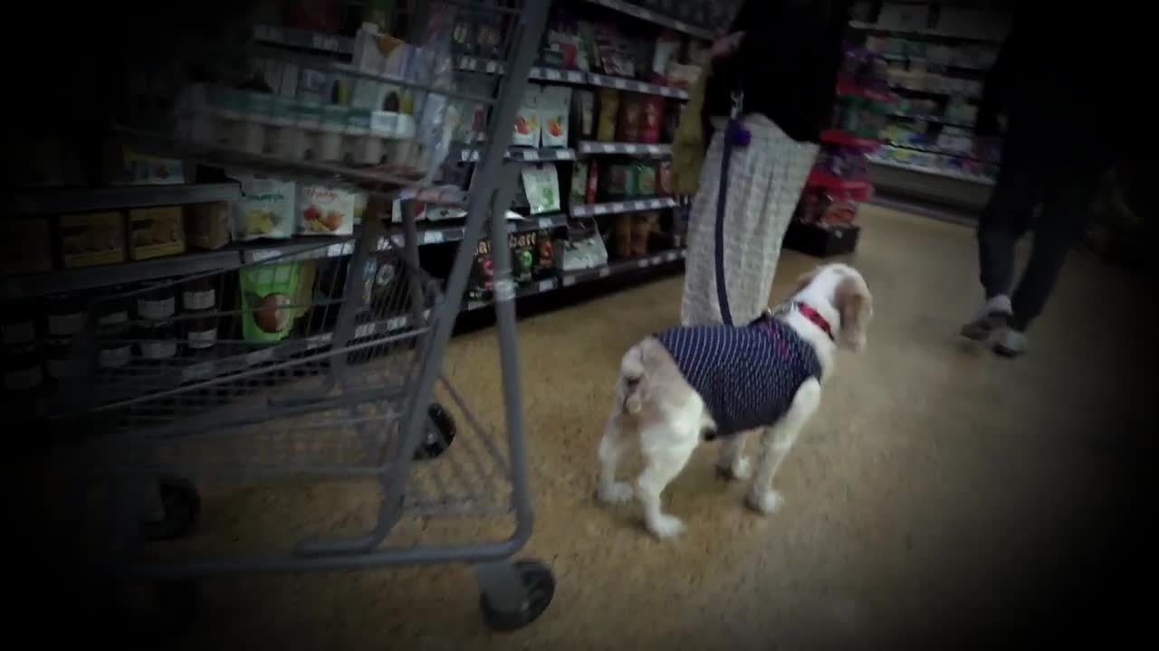 Shoppers question rising number of dogs taken into South