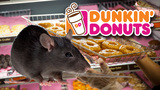 Rodent droppings found inside South Florida Dunkin Donuts