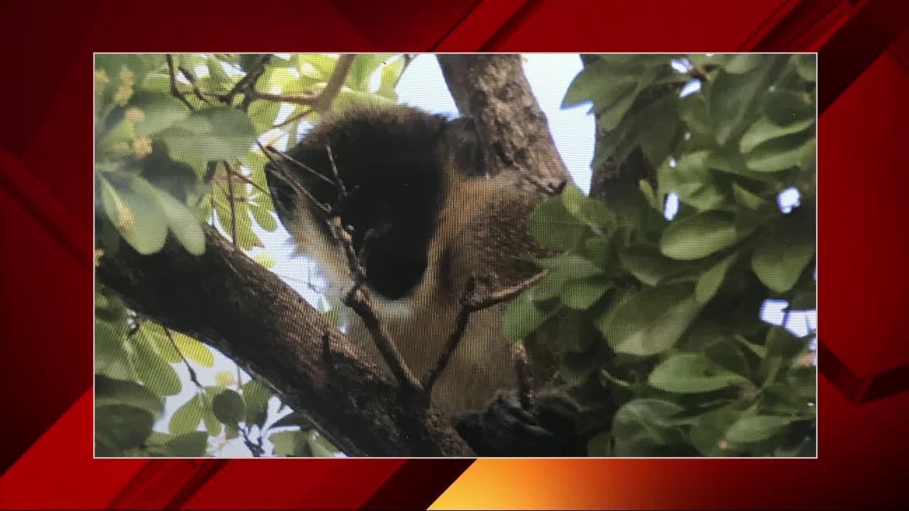 Florida fish and wildlife officers investigate monkey for Florida fish and wildlife officer