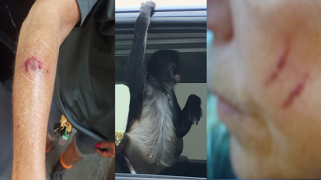 Florida Home Depot Employee Attacked By Spider Monkey On Leash