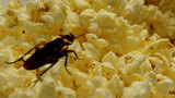 Roaches, flies force temporary closure of movie theater's food service area