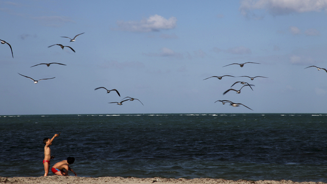 Swimming advisory posted at multiple Miami-Dade beaches