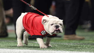 10 great college football mascots