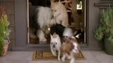 Nina Dobrev and Vanessa Hudgens talk about 'Dog Days ' movie